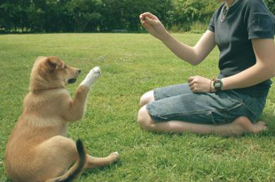 Como adestrar cães